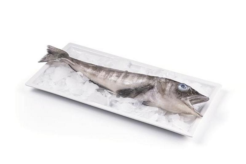 Ледяная Рыба Цена Фото